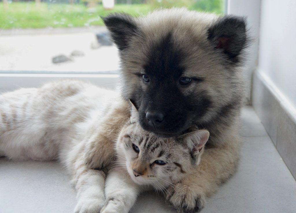 Animaux domestiques : chien et chat